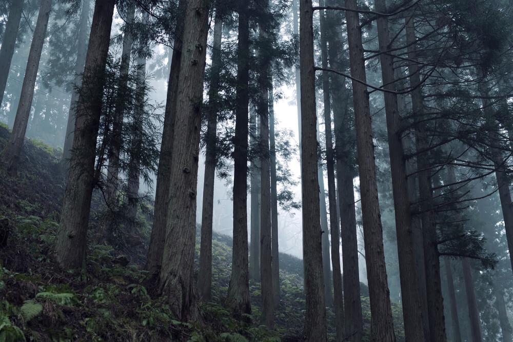 日本林業の課題 国産材の増加が難しい原因